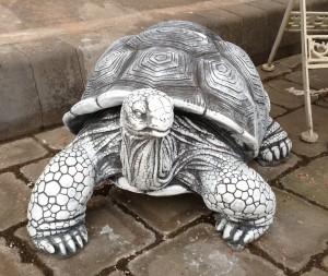 photo Tortoise