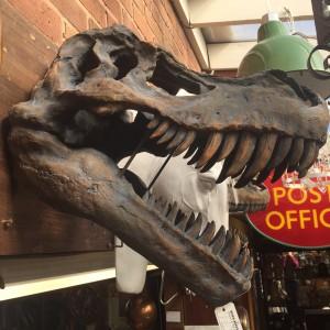 Dino Head